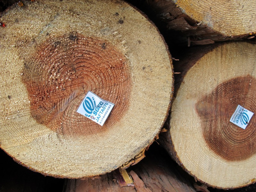 森林認証丸太 田村材木店