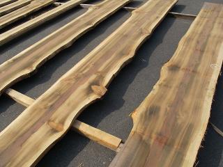 日光杉 節有一枚板
