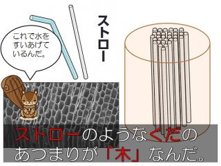 木材 顕微鏡図2